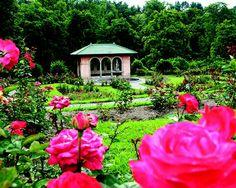 Rose Garden, Vanderbilt Mansion, Hyde Park, NY