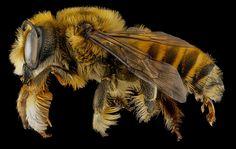 bee-5.jpg (800×508)