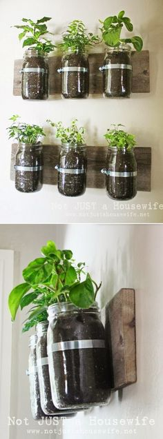 Mason Jar Wall Planter. Kitchen or dining room decoration.  DIY. Green decorating