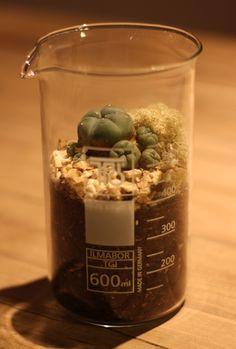 自分だけのテラリウムで、インドアガーデンを愉しもう テラリウムとは、空き瓶などに植物や土、苔などを入れて楽しむプチガーデニングのこと。東京・品川にあるSLOW HOUSEさんでは、土日限定でテラリウムのオーダーメイドも受け付けているそうなので、興味のある人は足を運んでみて。 参考リンク>> テラリウムの作り方とアイディアまとめ - NAVER まとめ