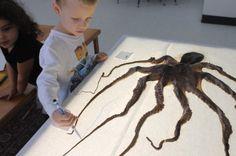 Children learn about unique creatures hands-on. #reggio