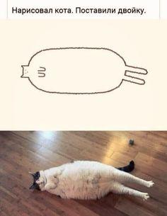 Грешная You Stupid, Life Memes, Cringe, Cat Art, Cute Pictures, Cute Animals, Humor, Cats, Internet