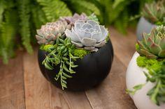 Sophisticated pumpkins in black, white or grey – overflowing with gorgeous pastel succulents! We've paired them with bright green reindeer moss and hanging string of beans. This combination of a harvest favourite along with homegrown succulents, makes a perfect Autumn gift or home accent. The best part is that you don't have to carve the pumpkin yourself, and you can use it again year after year!