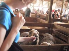 Clara Parkes' Report from the  Maryland Sheep and Wool Festival,  West Friendship, MD May 5-6, 2012; I want to be there next year !