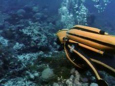 El Mundo Submarino De Jacques Cousteau - El Mundo Salvaje De La Jungla D...