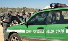 Blitz della Forestale a Bosco Quarto: tre arresti - http://blog.rodigarganico.info/2013/cronaca/blitz-della-forestale-bosco-quarto-tre-arresti/