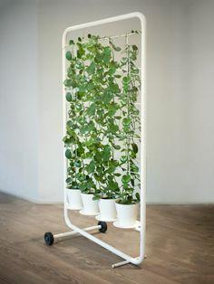 aménagement de maison et cloison végétale