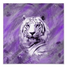 Purple Tiger ~ hometown mascot