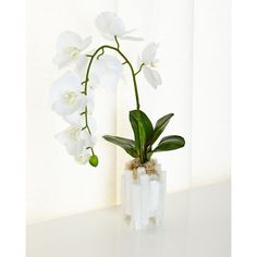 John-Richard Collection Selenite Orchid Faux Floral Arrangement (14.565 RUB) via Polyvore featuring home, home decor, floral decor, white fake flowers, orchid silk flowers, silk orchid arrangement, orchid artificial flowers и white home decor