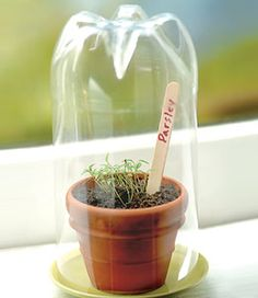 """DIY Mini Green House - use a trimmed, clean upturned drink bottle to create humidity while raising seeds. Easy to grow micro greens or herbs on a sunny windowsill this way + keep plastic out of landfill. Trim sprouted seedlings with scissors & add to salads or transplant outdoors when mature. 