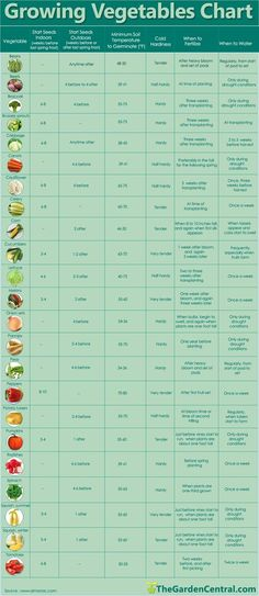growing vegetables chart...if I ever get around to making the raised garden on our balcony this will come in handy! :P