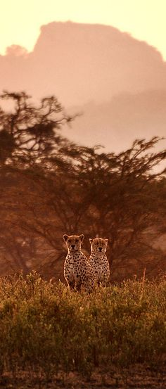 Dawn in Serengeti
