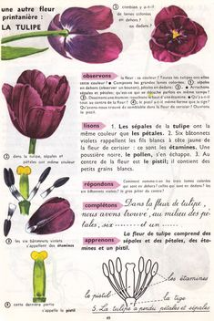 Study French, Learn French, French Phrases, Nature Journal, Le Far West, French Language, Botany, Poppies, Plants