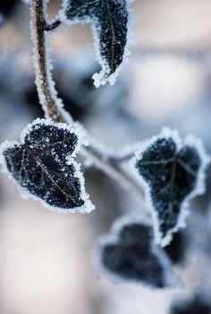 black . frozen