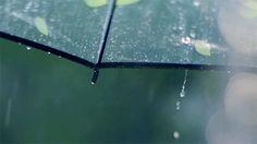 Rain and Coffee Rain And Coffee, Hipster Photography, Smell Of Rain, Summer Rain, Fall Photos, Tumblr Girls, Rainy Days, Good Times, Gifs