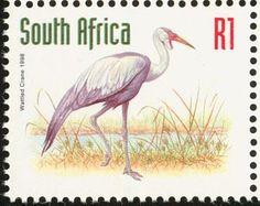 Wattled Crane (Grus carunculatus)