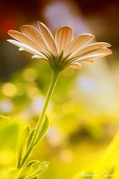 THE FLOWER by Alessandro Serresi on 500px