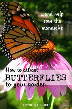 Not only are butterflies beautiful, they play an essential role in nature; not only do they charm us with their beauty, but they pollinate the plants as well. Monarch butterflies are struggling right now because milkweed - the one plant they need for survival - is in short supply. You can help by planting a variety of native flowering plants to provide what they need for survival. Read on as eBay shares seven basic things you can do to help save the monarchs. #sponsored