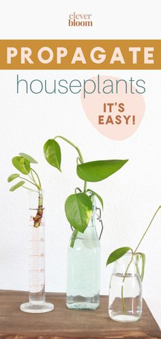 Learn how to propagate plants the easy way with step by step instructions! #propagate #plants #houseplants Succulent Planter Diy, Succulent Care, Diy Planters, Growing Succulents, Succulents Diy, Growing Plants, Plant Cuttings, Propagation, House Plant Care