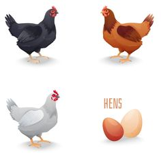 Rooster Cartoon Royalty Free Cliparts, Vectors, And Stock Illustration. Image 15234307. Cartoon Rooster, Hens, Vector Art, Photo Editing, Clip Art, Adobe Illustrator, Illustration, Vectors, Royalty