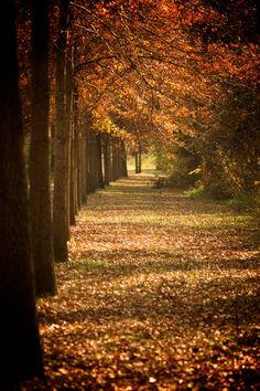 autumn along the canal, Delaware & Raritan Canal State Park, Lambertville, New Jersey