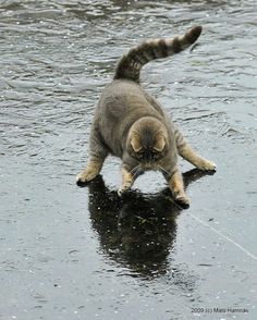 Chat dansant sous la pluie (Cat dancing in the rain). (Mats Hamnas. 2009).