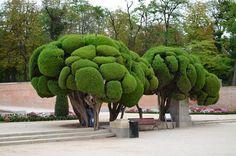 Mediterranean-Cypress-1.jpg (1024×678)