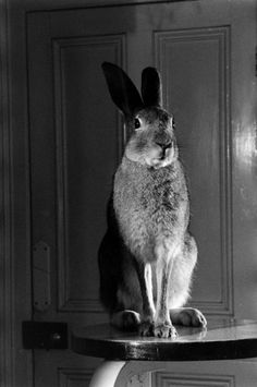 Portrait of Horace the Hare