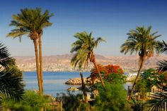 """THE GULF OF AQABA"" *** The coastline of the Gulf of Aqaba is among the finest in the Red Sea, with very welcoming beaches and a coral reef rich in biodiversity, as the flora as the fauna."