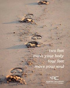 Two feet move your body, four feet move your soul