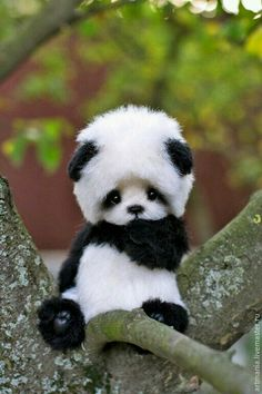 This can't be a real baby panda??