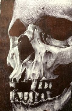 This is one hell of an sketch. Just using a typical ballpoint pen Pure talent and beauty Biro Art, Ballpoint Pen Art, Ballpoint Pen Drawing, Decay Art, Crane, Skeleton Art, A Level Art, Ap Art, You Draw