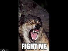 When someone trash talkin' BAE | FIGHT ME | image tagged in fight me,wolf,true,true story,bae | made w/ Imgflip meme maker