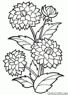 Peonies? Coloring page