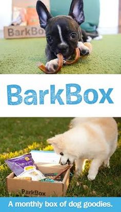 A cute gift idea for anyone who loves their dogs...A box of high quality dog products for your pup, delivered to your door every month!