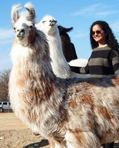 See Instagram photos and videos from Parul ↪ Girl-in-Chief (@girlinchief - Happy New Year Friends!! ⭐⭐⭐  As we step into a brand new year, what is it that you want to do most this year? First up for me: Have more fun. (These silly llamas agree, there's always room for a good sense of humor).   #happynewyear #hello2018 #girlinchief #llamas #llamalove