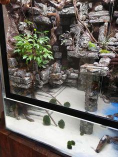 Aquaponics Home Aquarium Info: 3581006094 Gecko Terrarium, Terrarium Reptile, Reptile Decor, Reptile Room, Turtle Habitat, Reptile Habitat, Les Reptiles, Reptiles And Amphibians, Bearded Dragon Terrarium