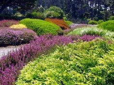Heath & Heather Collection at Mendocino Coast Botanical Gardens