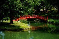 Red bridge, white swan.