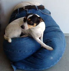 """Picture of No-Sew Blue Jeans Portable """"Lap"""" Dog Bed!"""