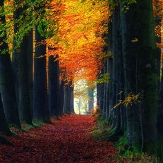 fall leaves by oer wout photography