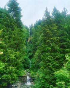 Por aquí caminando en medio de estos arboles centenarios  #Italia #vacanze #familytrip #montaña #Lombardia #agriturismo #ecologia #ecovidastyle