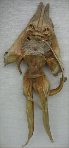 "Looks like an alien or strange earthly being, sometimes that which we label ""paranormal"" are not.  This is a dried sting ray carcass."