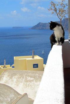 santorini's cat