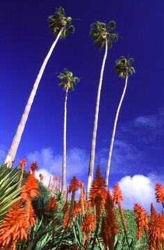 ✮ Laguna Palms - Laguna Beach, California