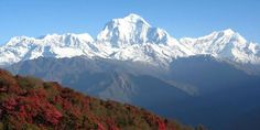 Annapurna trekking offers an unbelievable mountain trip along the Marshyangdi, Kali Gandaki and Modi River valley to reach the high pass, mountain settlement, Himalaya base camp and viewpoint. Walking journey ensure spectacular views with giant Himalaya, green valleys, hot springs, waterfalls, civilization, culture of the hill tribes, flora and fauna.