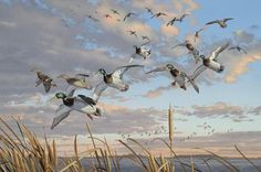 Waterfowl Paintings by Scot Storm 24