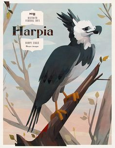 Birds of BrazilThis project is part of series of illustrations celebrating the incredible fauna of Brazil. With more than 18 hundred confirmed species, Brazil has one of the richest bird diversities in the world. Harpy Eagle, Bald Eagle, Bird Drawings, Animal Drawings, Illustrations, Children's Book Illustration, Jerry Images, Duck Art, Branding