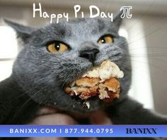 Here's a constant you can always count on: A cat's circumference is directly proportional to the amount of pi(e) they ingest! #HappyPiDay