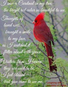 I saw a Cardinal in my tree, the bright red color so beautiful to see. Thoughts of loved ones brought a smile to my face, as I watched it flitter about with grace. Visitors from heaven they are said be, I feel bessed that you came to see me Look At You, Just For You, Signs From Heaven, Blessed, Miss You Mom, After Life, In Loving Memory, Beautiful Birds, Beautiful Pictures